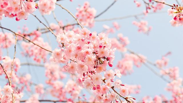 C'est le printemps sur Pharmafutur !