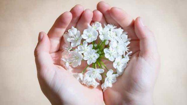 Deux mains qui tiennent des fleurs blanches.
